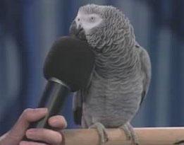 Papagal vorbeste la microfon