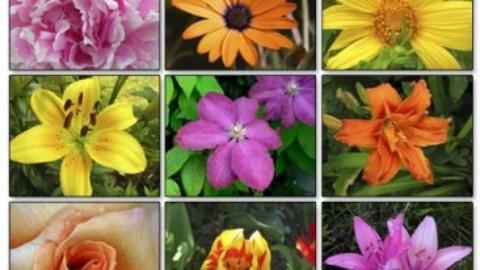 Vopsirea parului cu infuzii din frunze si flori