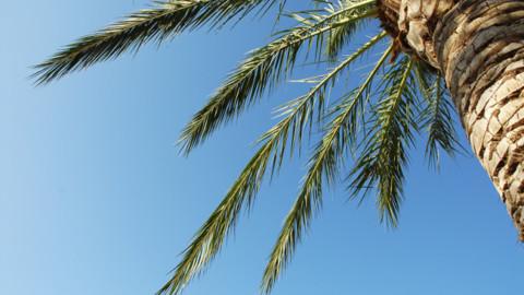 Uleiul de palmier este bun pentru sanatate