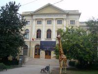 Muzeul Naţional de Istorie Naturală Grigore Antipa | Expoziţia Descendenţa speciei umane – Studii şi schiţe paleoantropologice