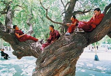 Gimnastica tibetana pentru sanatate