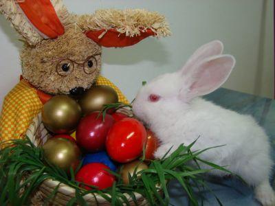 INCREDIBIL: românii încurcă Paștele cu Crăciunul!