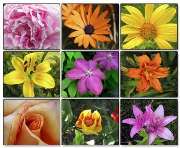 Zodiacul floral - tu ce floare esti?