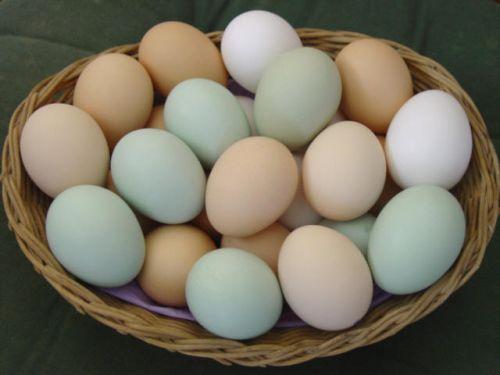 Cate oua ai voie sa mananaci pe saptamana?