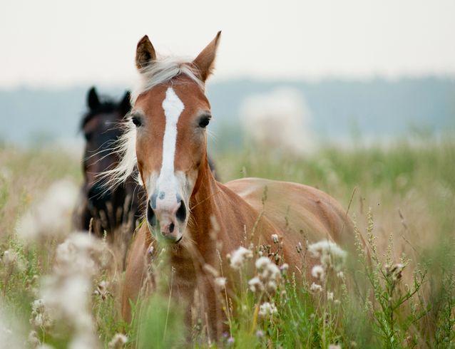Mistere si enigme: calul inteligent