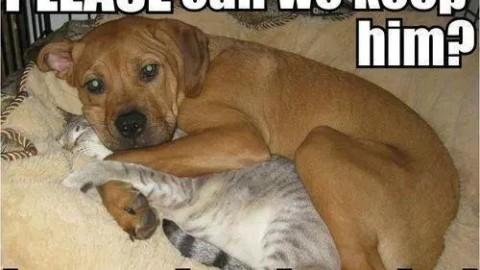 Va lasati animalul de companie acasa singur? Iata ce ar trebui sa stiti!