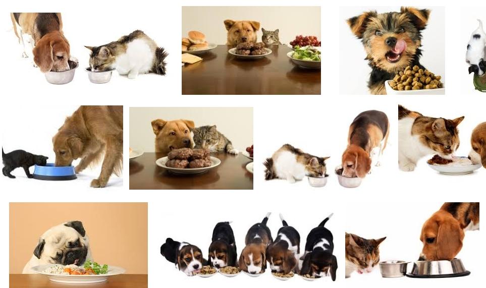 Ce mâncăruri favorite are animalul tău de companie? Păreri si povesti amuzante