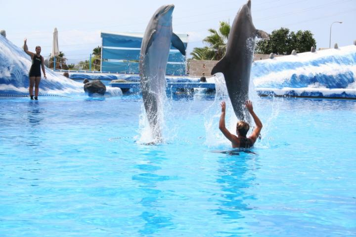 delfini-tumbe