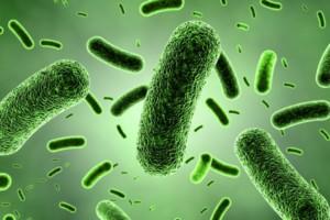 bacterieverde